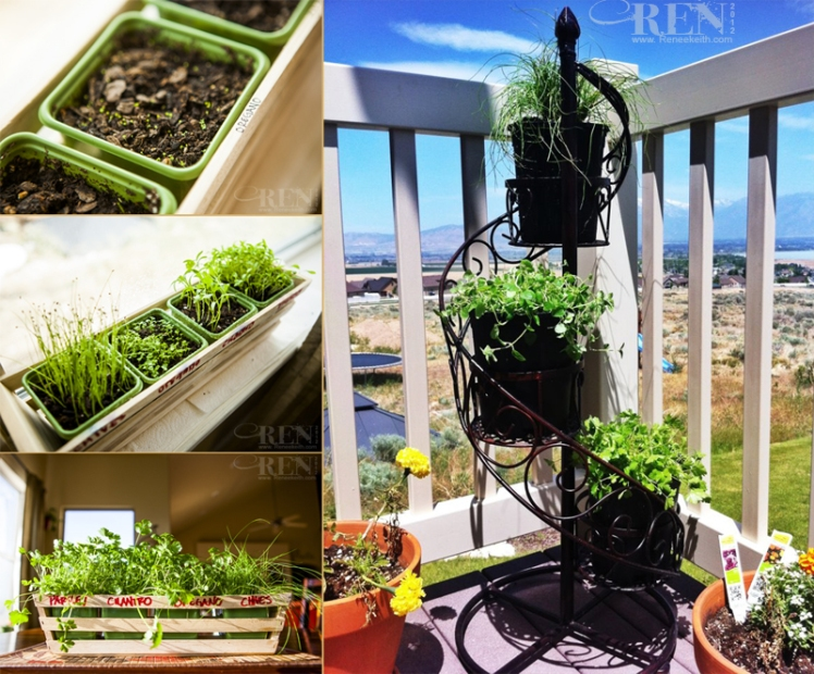 Herb garden started from seeds